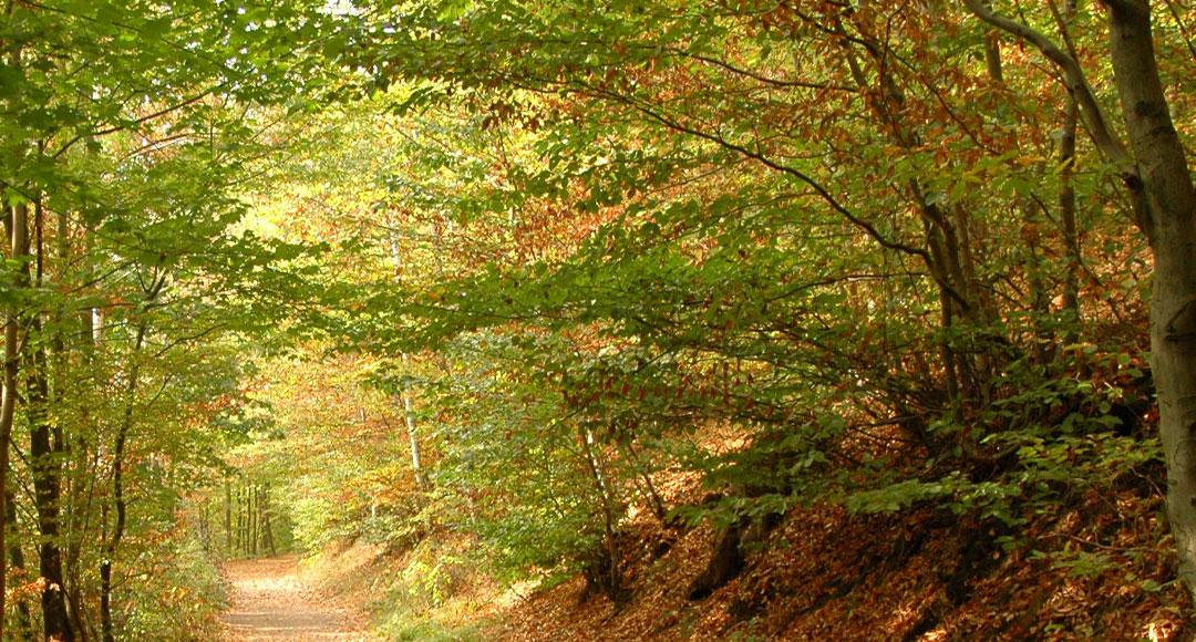 Wald, Mischwald, Ökosystem