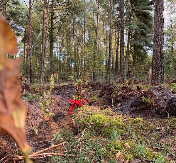 Wald, Baum, Baumpate, Blätterwald, Artenvielfalt, Laubwald, Trinkwasser