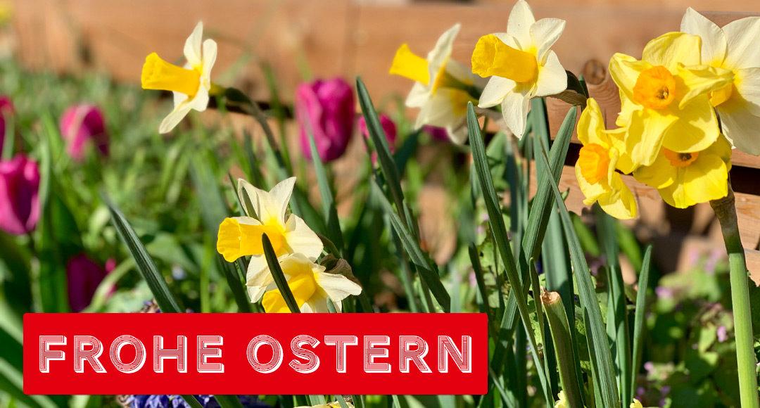 Frühlingsblüher Frohe Ostern